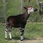 Pixwords OKAPI