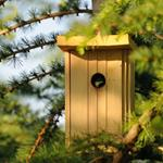 Pixwords BIRDHOUSE