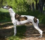 Pixwords GREYHOUND