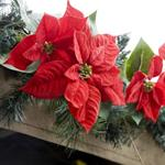 Pixwords POINSETTIAS