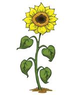 Pixwords SUNFLOWER