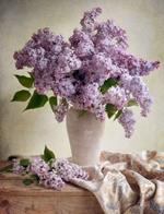 Pixwords LILAS