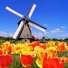 Pixwords HOLLAND
